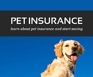 Pet insurance quotes